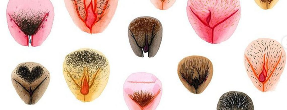 the vulva gallery