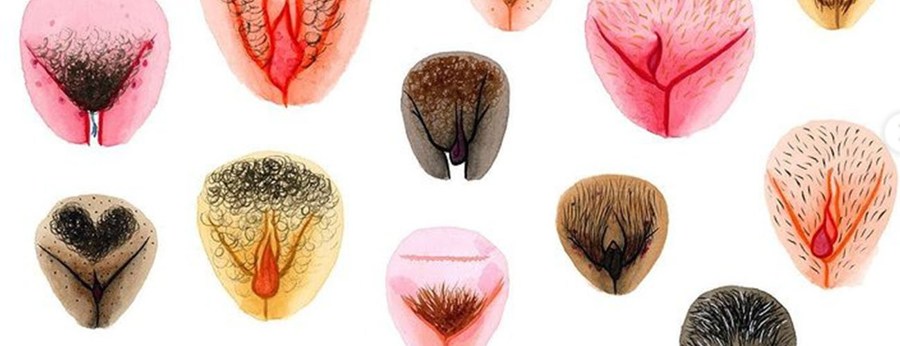 the vulva gallery